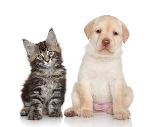 ペットの猫と犬